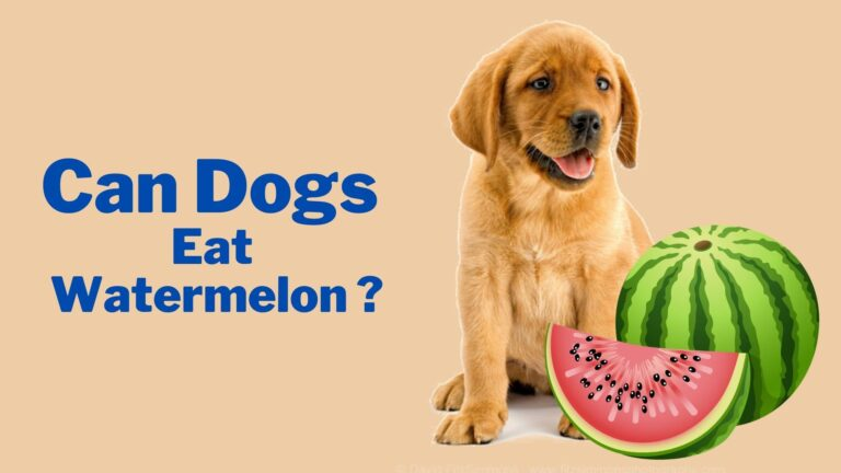 Can dog eat watermelon