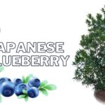 Japanese blackberry a complete guide