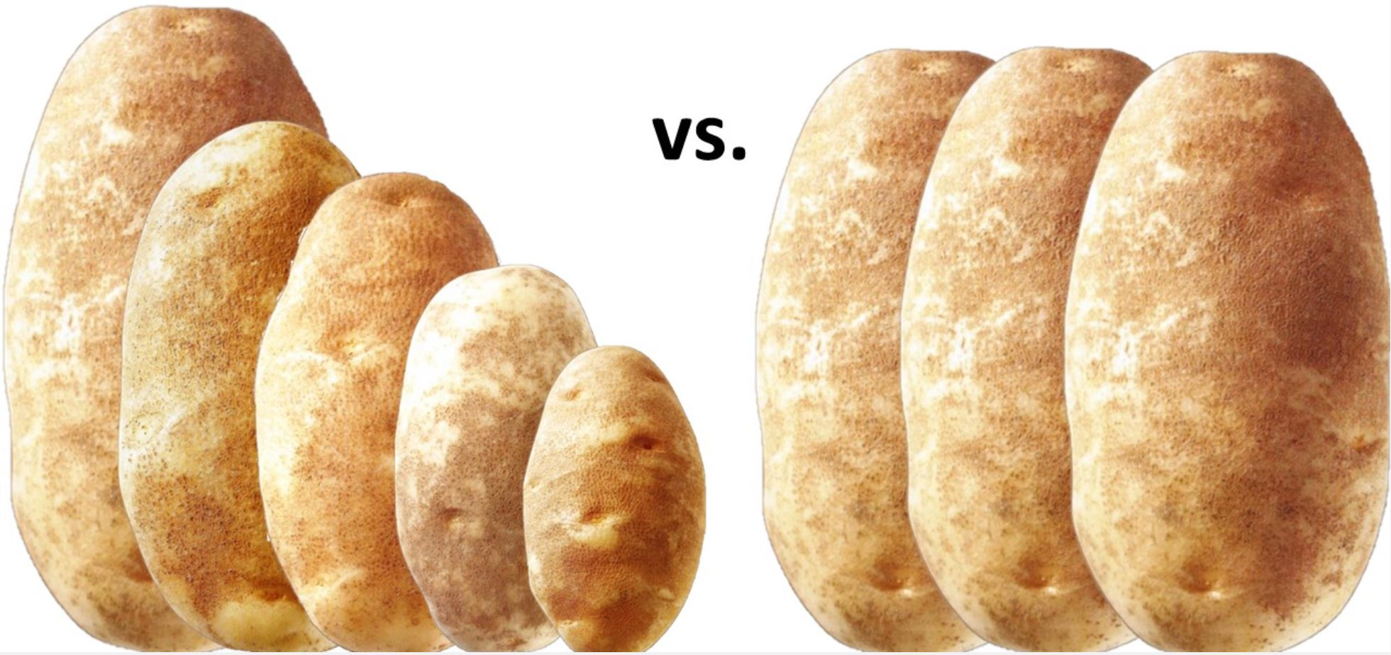 Big Potatoes vs Small Potatoes pound comparison